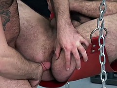 suspended bear raw assfucked after rimmed